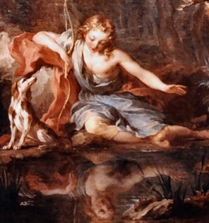 Narcissus-296